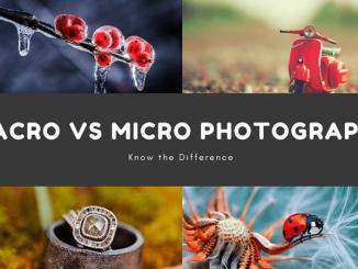 Macro Vs Micro Photography