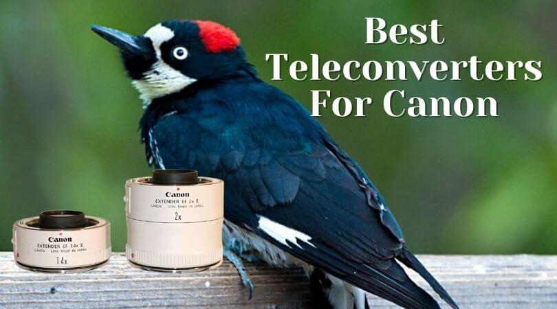 Best teleconverters for Canon